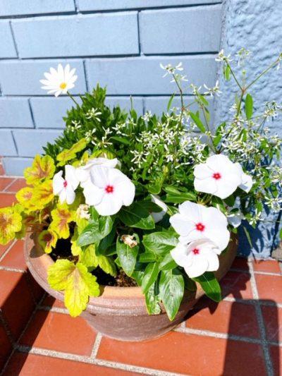 玄関先お花①