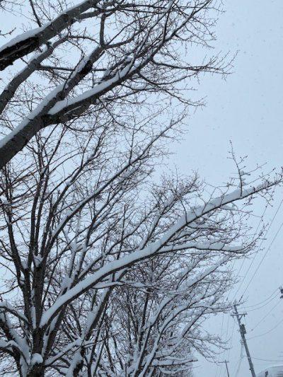 大雪② (2)