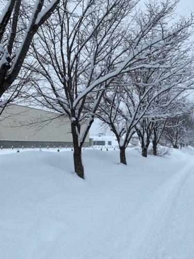 大雪③ (2)
