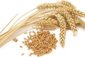 小麦受入スタッフの職業、求人イメージ写真